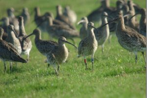 Curlew talk notes