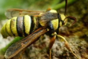 Hornet Moth time