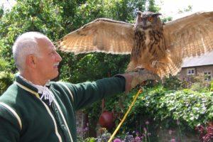 Tudor Birds of Prey Day – Saturday 17 August