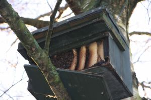 Squatters in Little Owl box