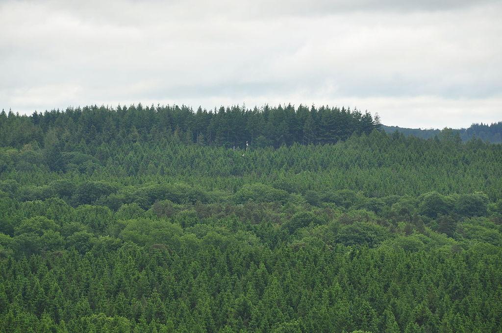 Forest of Dean raptors