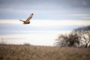 Winter Bird Survey cancelled