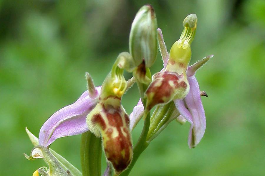 Orchids in Gloucestershire: a botanical safari