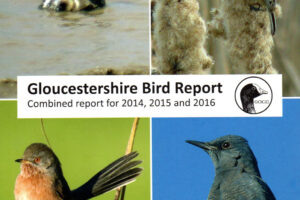 Gloucestershire Bird Report 2014-16