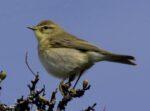 Dawn Chorus events