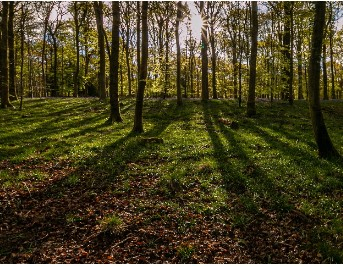 The Forest of Dean - Its Wildlife and Natural History