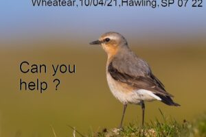 County Bird Recorder – can you help?